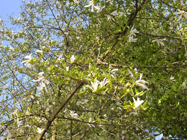 w Wojsławicach jest niezliczona ilość gatunków drzew i krzewów