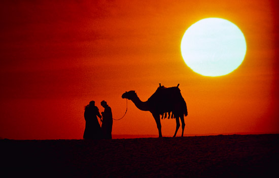 16 Great Collections of Extraordinary Camel Photography ...