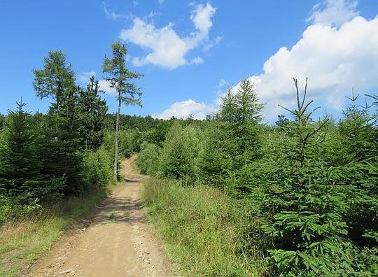 Przełęcz przed Bukową.