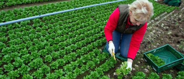 """Πρόγραμμα επιδότησης """"πράσινης"""" γεωργίας"""