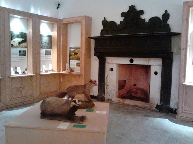 Museo storia naturale Aulla nella fortezza della brunella: animali impagliati