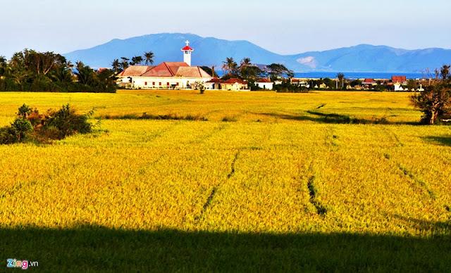 Vietnam is wonderful in ripen rice season 9