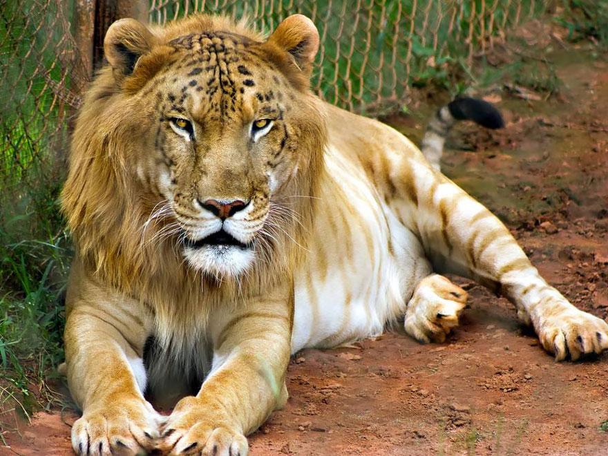 شاهد بالصور غرائب الحيوانات الهجينة سين المعرفة