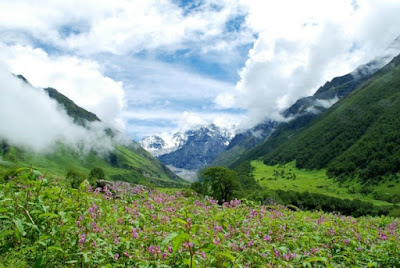 Valley of Flowers at it's full glory
