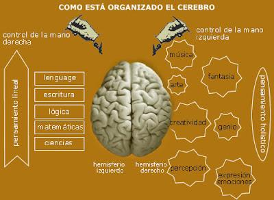 Control del cerebro· conlosochosentidos.es