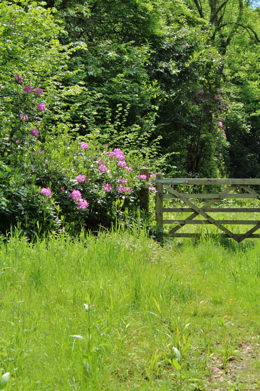 Gate in woodland