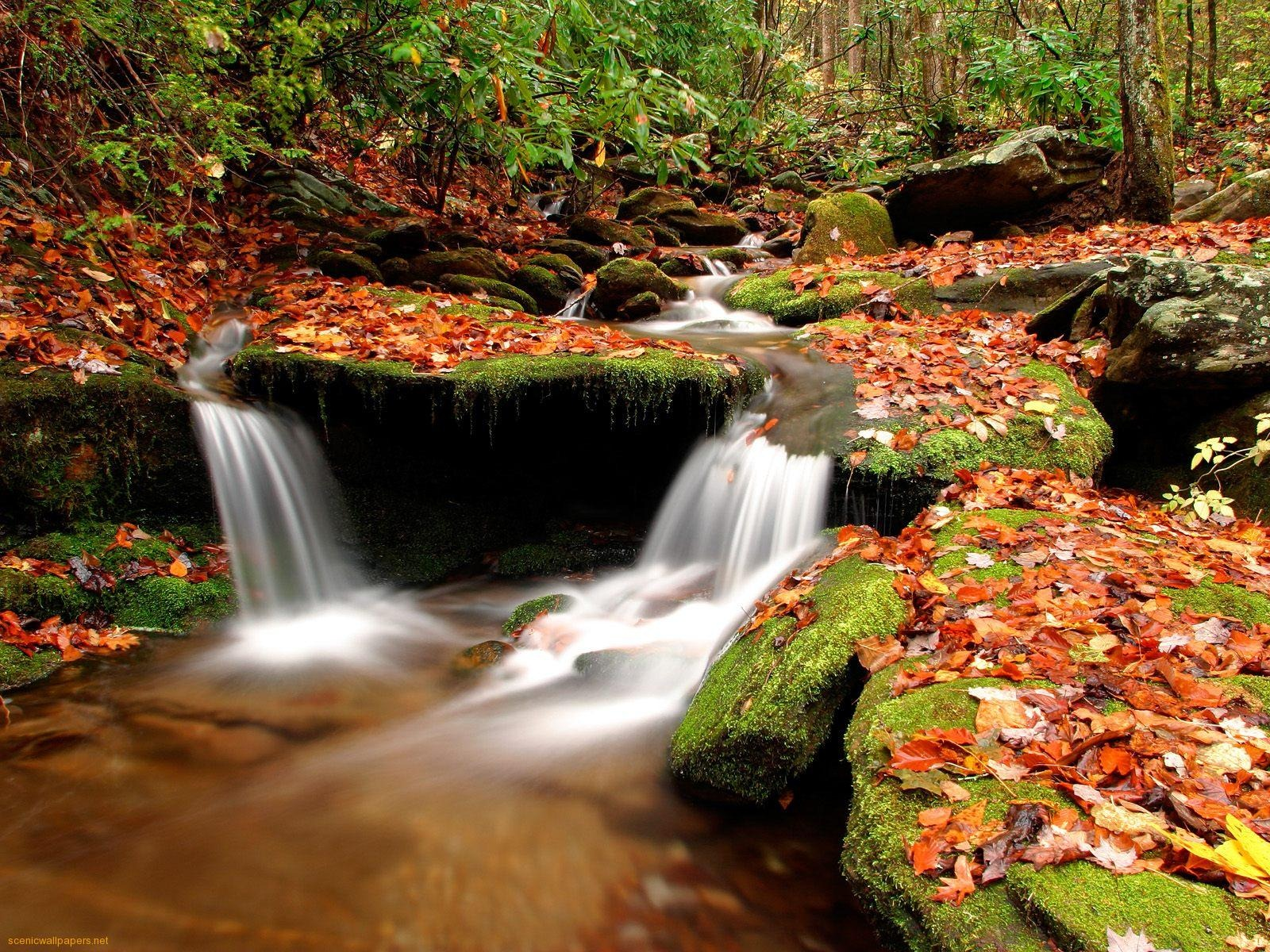 Desktop Background Wallpapers: HD-WaLpaper: Autumn Wallpapers