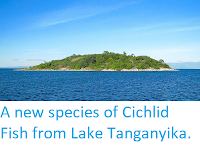 http://sciencythoughts.blogspot.co.uk/2012/10/a-new-species-of-cichlid-fish-from-lake.html