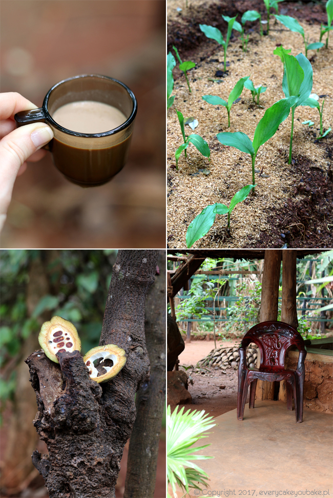 ogrody przypraw w Matale na Sri Lance