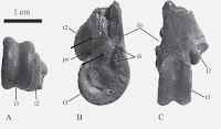 http://sciencythoughts.blogspot.co.uk/2014/05/fossil-romainvilliine-geese-from-late.html