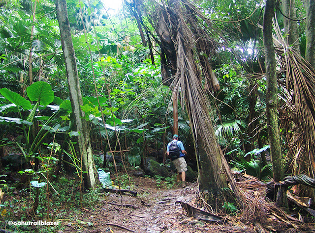 Maunawili Falls Oahu Trailblazer Kailua hiking