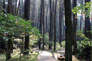 bagian dalam taman hutan juanda bandung