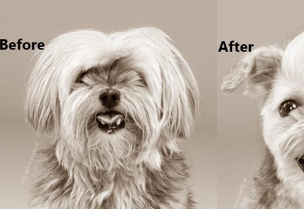 dog haircuts dog haircut meme dog haircut near me dog haircut machine dog haircut fails dog haircut places dog haircut styles dog haircut cost dogs haircut styles dog haircut like lion dog haircut at home