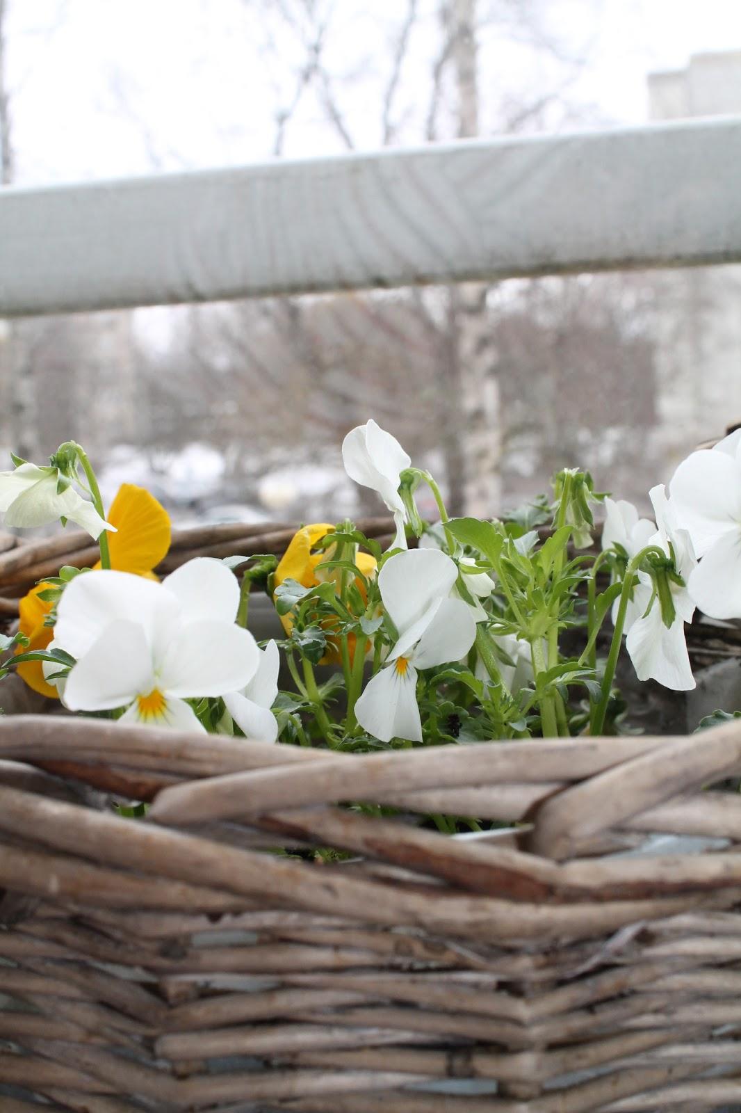 viitenä kuutena keväinen päivä
