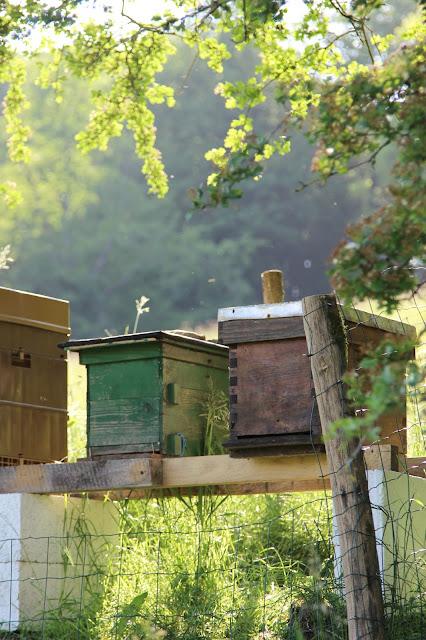ruchette à abeilles