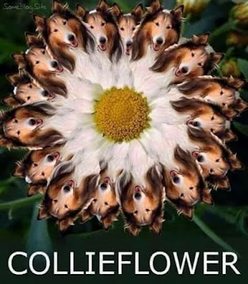 Funny Collieflower Pun Picture