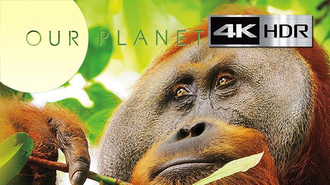 Nuestro Planeta (2019) Temporada 1 WebRip 4K UHD [HDR] Latino-Castellano-Ingles