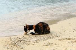 kolorowy kot je kawałek chleba nad brzegiem greckiego morza