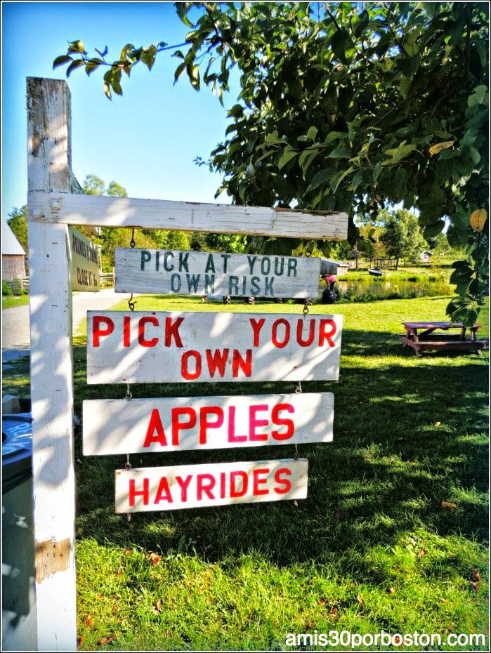 Apple Picking en una Granja de Ipswich