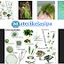 Klasifikasi, Ciri - ciri, Cara Reproduksi, dan Contoh Ganggang Biru/ Ganggang Hijau biru (Cyanophyta/ Cyanobacteria)