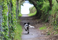 By Andrew Thomas from Shrewsbury, UK (My wifes dog running to the sea....) [CC BY-SA 2.0 (http://creativecommons.org/licenses/by-sa/2.0)], via Wikimedia Commons