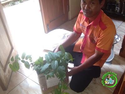 Kang Mumu ( Indah Cargo Subang) jemput bibit bunga  ke warung benih MANGYONO.com