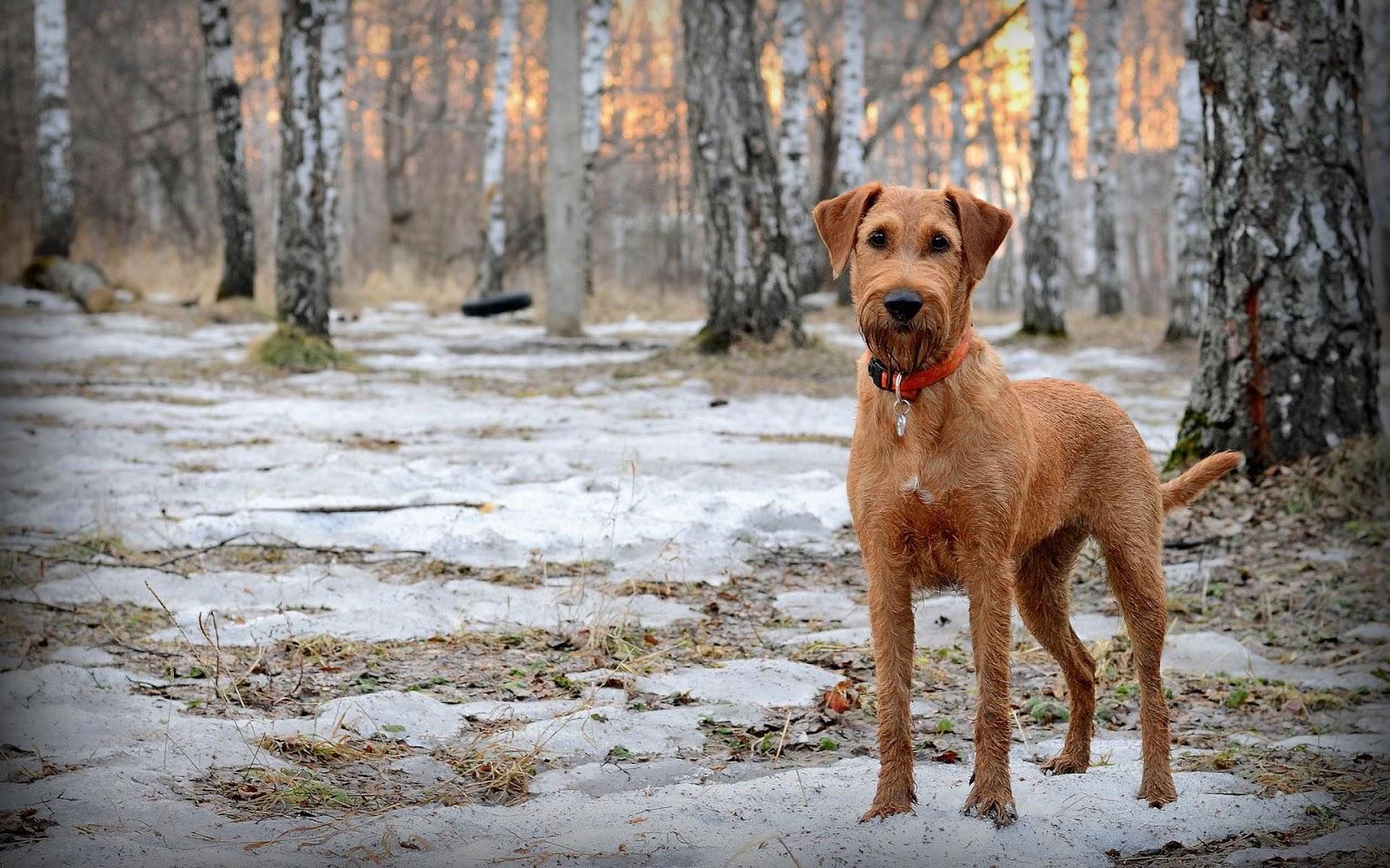 Foto van een hond in het bos in de sneeuw