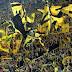 Kipigo chasababisha Borussia Dortmund kuitupia lawama UEFA.