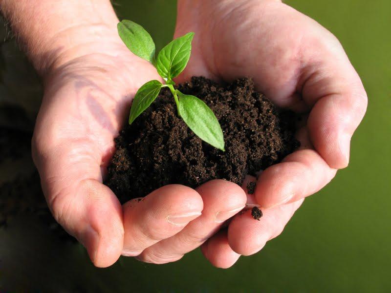 Let S Think Smart Cara Menanggulangi Pencemaran Lingkungan