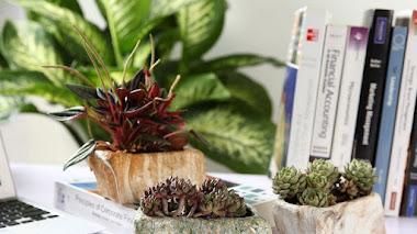 Pequeñas macetas decorativas para pequeñas plantas suculentas