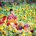 Taman Bunga Nawari, Selfie di Kebun Bunga Matahari dengan Kimono Cantik