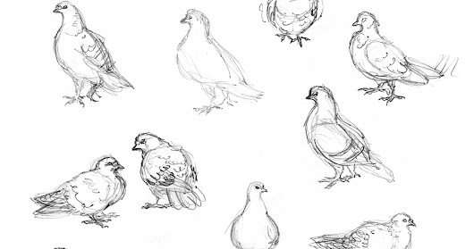 Amy Holliday Illustration : Sketchbook // Bird drawings: Street Pigeons
