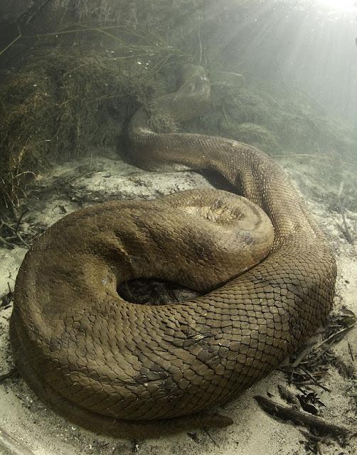 Inilah 7 buaya terbesar di dunia yang paling menyeramkan wow ngeri 7 ular terbesar di dunia raksasa saat ini reheart Image collections