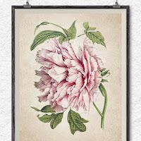 Fresh Etsy vintage flower prints botanical clipart peony illustration wall art