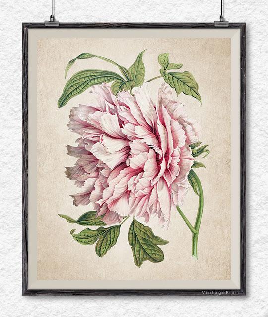 Etsy vintage flower prints botanical clipart peony illustration wall art