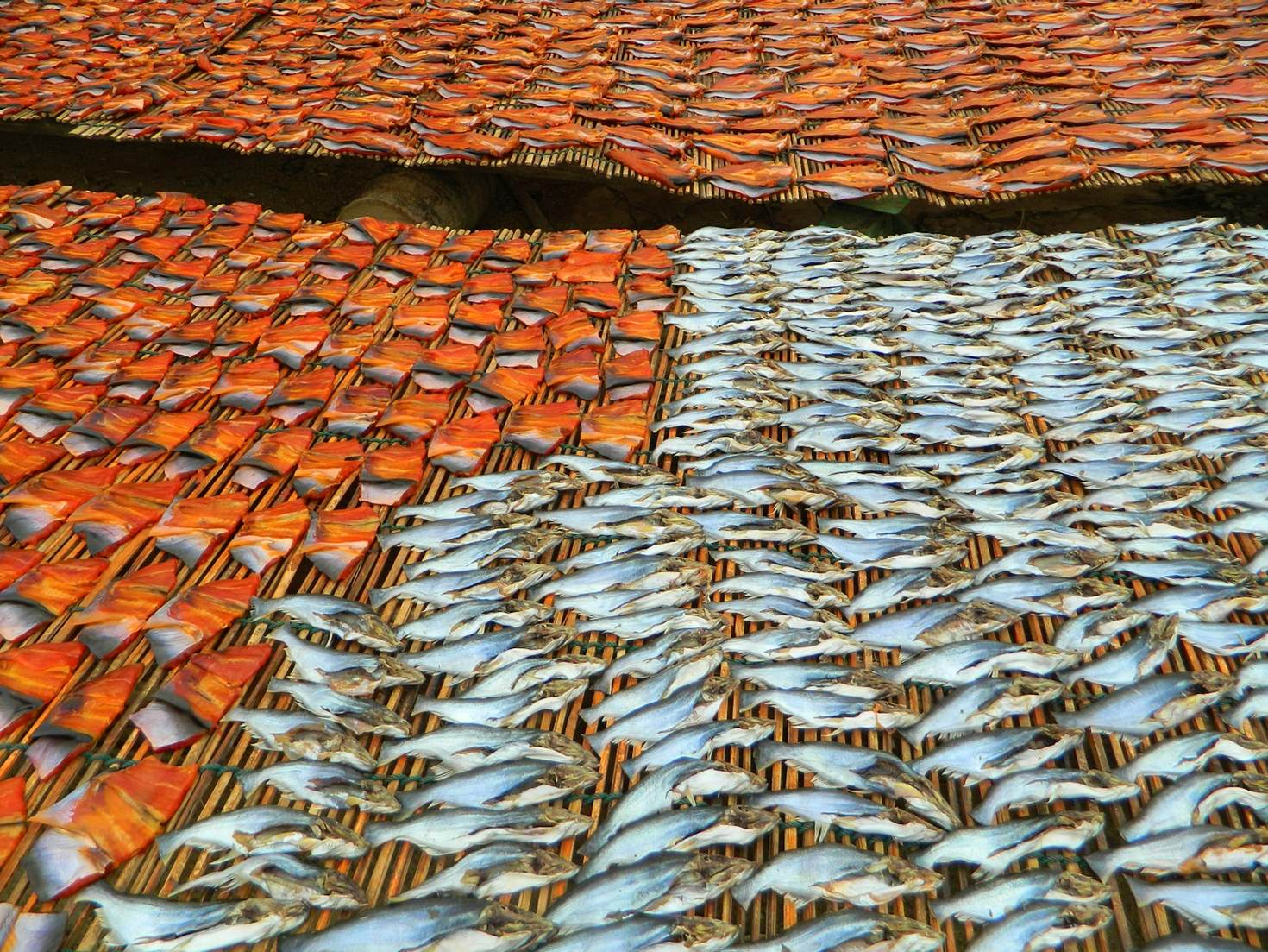 Fish drying at the prahoc factory outside Battambang