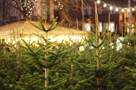guide to real christmas trees