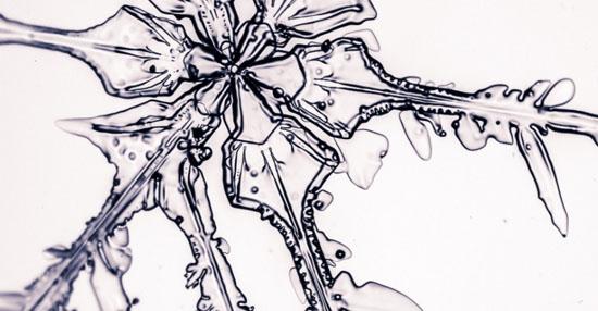 As coisas mais bizarras que você sempre quis ver no microscópio - Floco de Neve