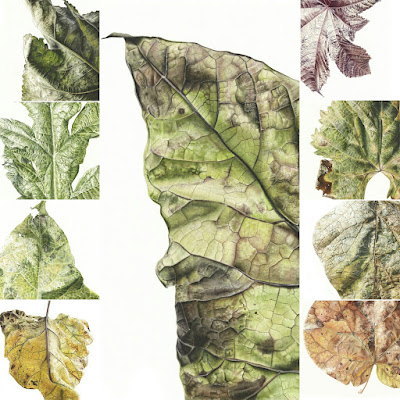 Botanical paintings of leaves