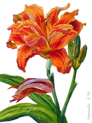 Orange Daylily botanical print
