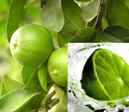 50 Manfaat dan Efek Samping Jeruk Nipis sebagai Tanaman Herbal Untuk Kesehatan dan Kecantikan