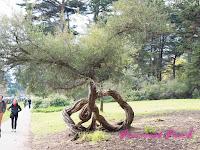 形狀特別的樹木們
