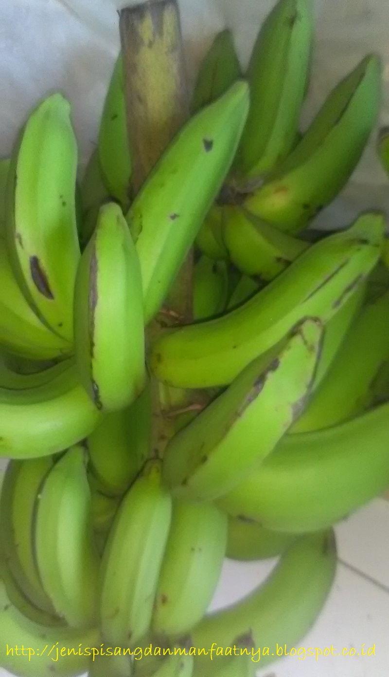 Pisang Raja Nangka : pisang, nangka, Warna, Pisang, Nangka, Matang, Seperti, Jenis, Manfaatnya