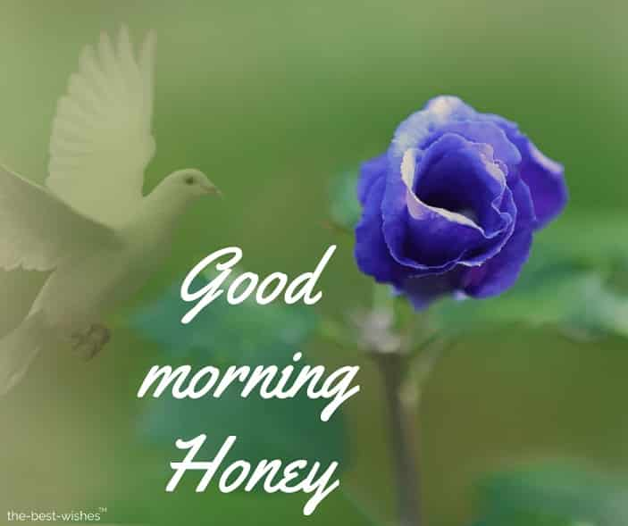 photo of good morning honey