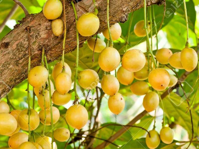 Asian fruits list