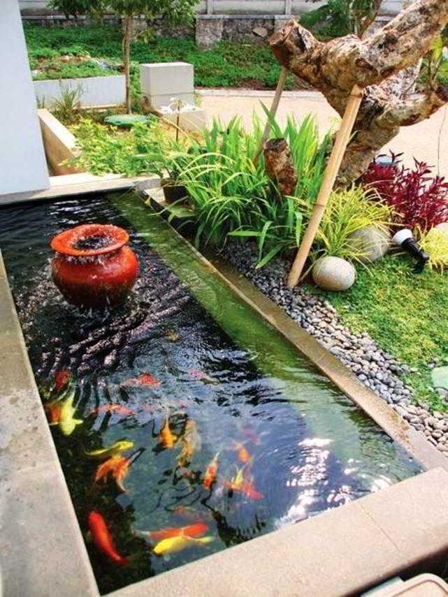 Desain Kolam Ikan Hias Minimalis
