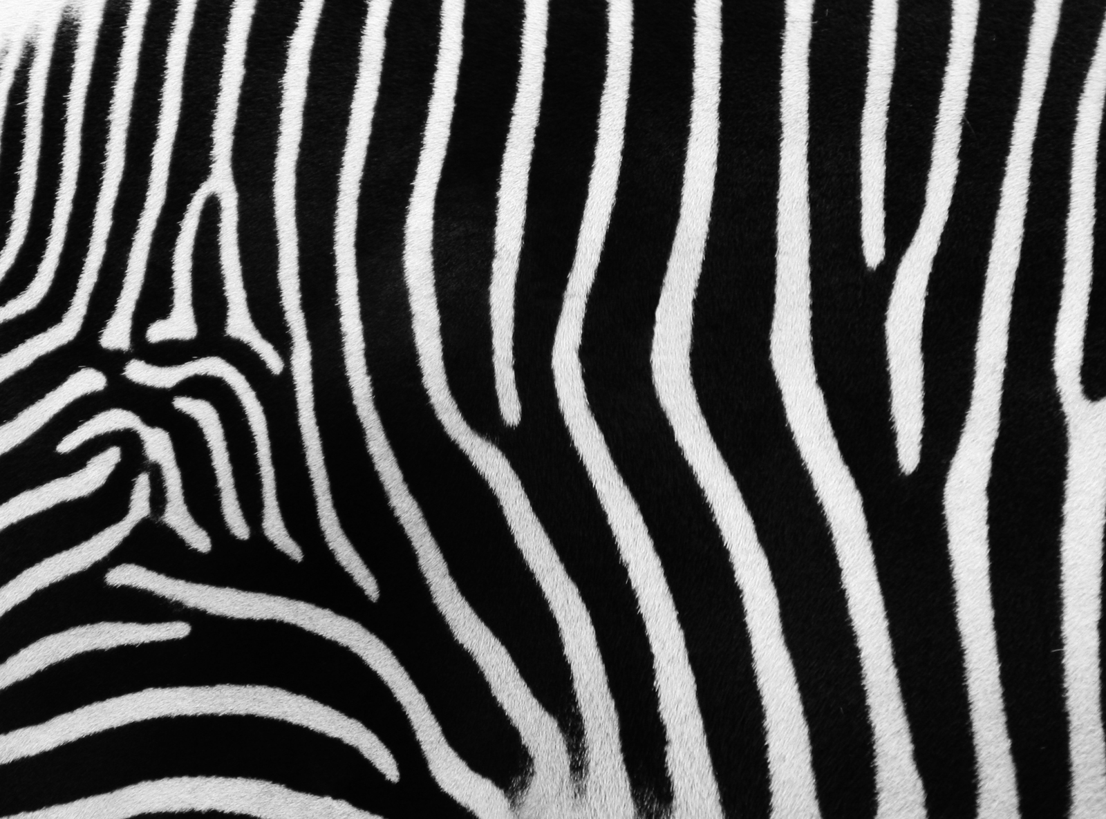 zebra stripe wallpaper stuff - photo #35