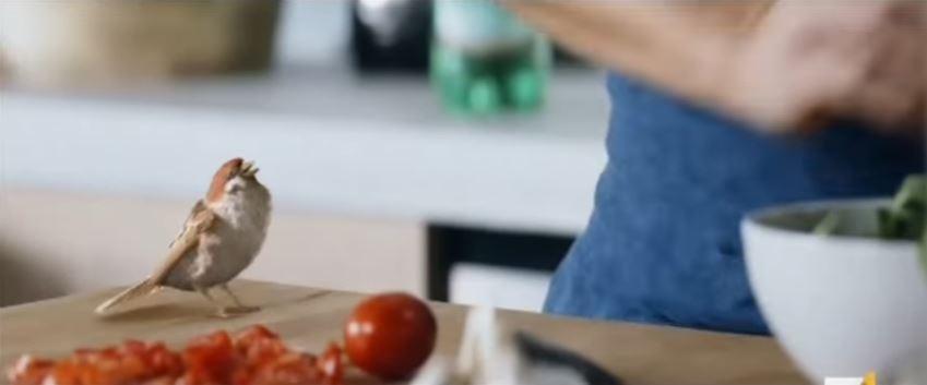 Pubblicità Uliveto spot con Del Piero e uccellino con Foto - Testimonial Spot Pubblicitario 2017