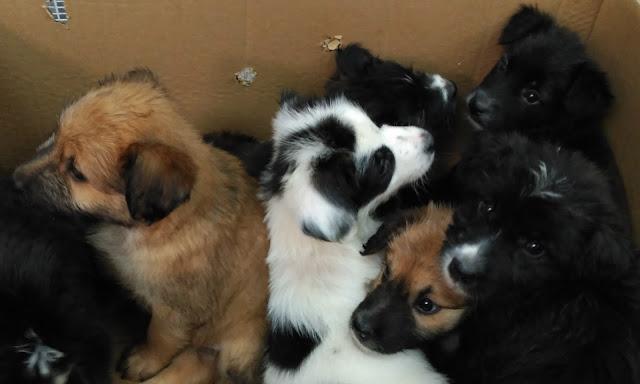http://www.scoobymascotes.com/2017/07/puede-una-perra-tener-cachorros-de.html