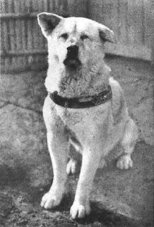 Hachikō - The True Testament of Loyalty